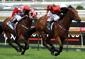 2015 Group 1 Oakleigh Plate: Racing live updates, tips and results