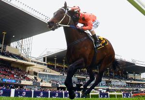 Black Caviar (horse) wins 2011 T J Smith