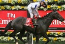 Can Americain win the 2012 Melbourne Cup?