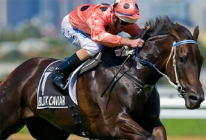 Black Caviar: 2013 William Reid Stakes – Horse racing live updates, blog