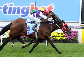 Cox Plate 2012: Winner Ocean Park beats All Too Hard