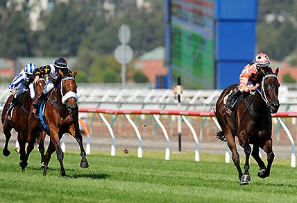 Jockey Luke Nolen riding Black Caviar leads the field to win the $500,000 Group 1 race Black Caviar Lightning at Flemington race track in Melbourne, Saturday, Feb. 16 2013. (AAP Image/Joe Castro)