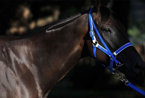 Black Caviar to race in Sydney after stand-off