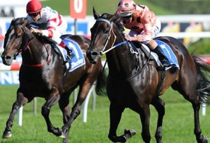 Black Caviar: the greatest of them all