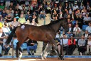 Medaglia d'Oro colt fetches two million dollar price tag