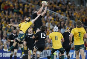 Wallabies video analysis: perception versus reality