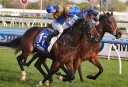 The Championships: 2014 Queen Elizabeth Stakes and Sydney Cup preview