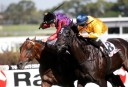 Melbourne Cup 2014: Second acceptances announced, Silent Achiever omitted