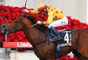 Hong Kong International Races preview and selections