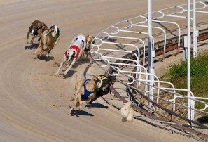 A wise choice for greyhound racing reform