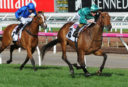 Melbourne Cup 2017: Exotic bet help – quinellas, trifectas, first fours and more!